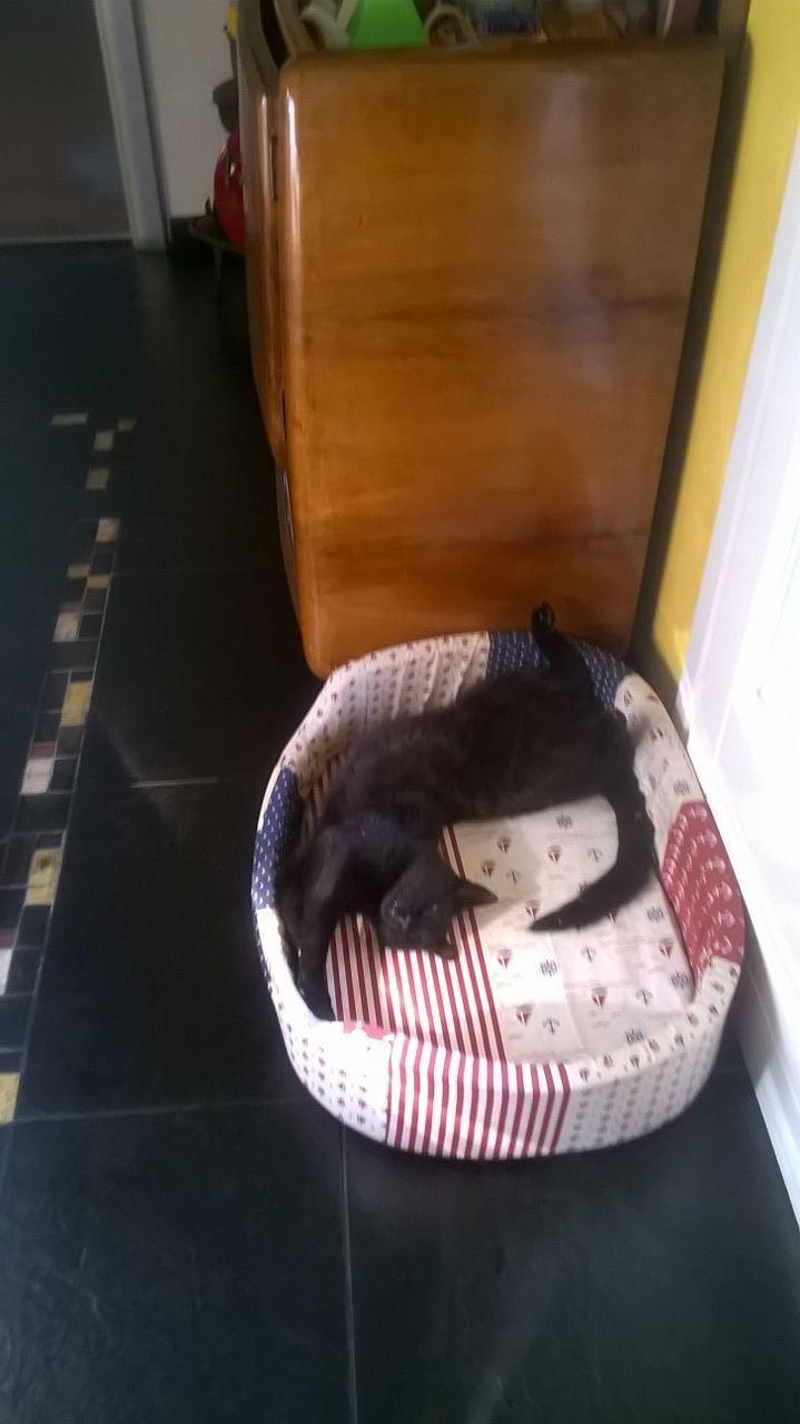 Gatto scomparso a bordighera da tre giorni manca da casa - Gatto solo in casa per 15 giorni ...